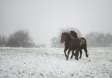 Laufende Ponys im Schnee von Tania Perneel