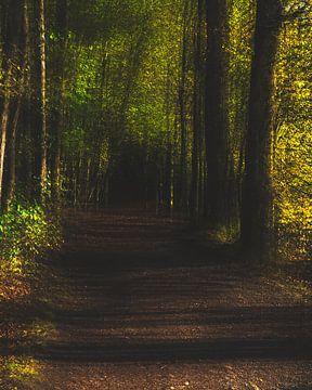 Wald Abstraktion #2 von Keserű Collective