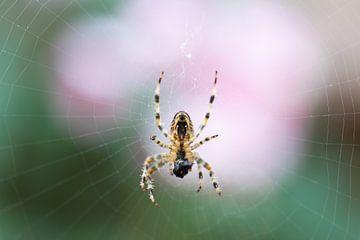 Spinne mit Beute von Tania Perneel