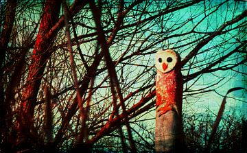 Wood owl van Roswitha Lorz