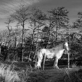 Een wit paard geniet van de zon op een mooie winterse ochtend van Alex Hamstra