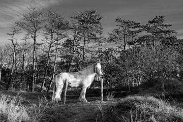 Ein weißes Pferd genießt die Sonne an einem schönen Wintermorgen von Alex Hamstra