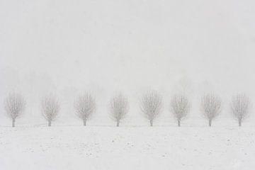 Knotwilgen in de sneeuw bij Langbroek van Daan Kloeg