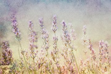 Lavendel van Claudia Moeckel
