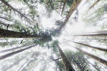 Boomtoppen in de mist van Nathan Marcusse