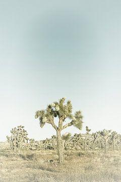 Joshua Tree National Park | Vintage von Melanie Viola