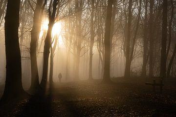 der neblige Einsiedlerwald von Nicola Mathu