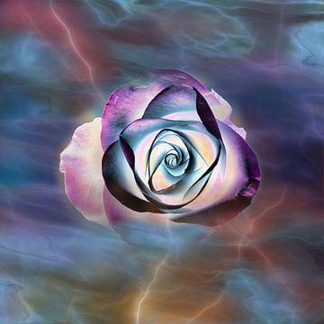 Lichte roos van Claudia Gründler