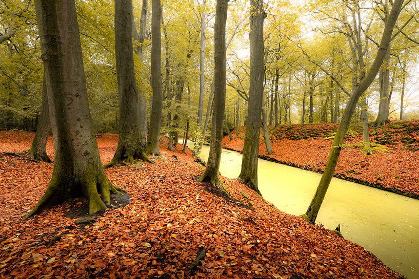 Herbstfarben im Park Clingendael in Den Haag von Rob IJsselstein