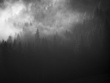 Trees in the fog 2 von Fernando Salgado