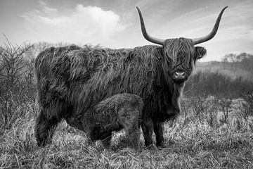 Schotse Hooglander met kalf in zwart-wit van Marjolein van Middelkoop