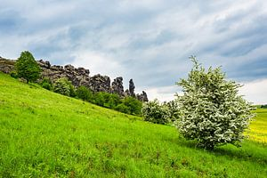 Landscape with trees and rocks in the Harz area, Germany van