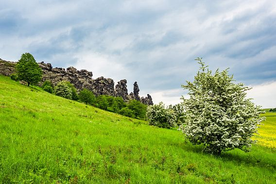 Landscape with trees and rocks in the Harz area, Germany