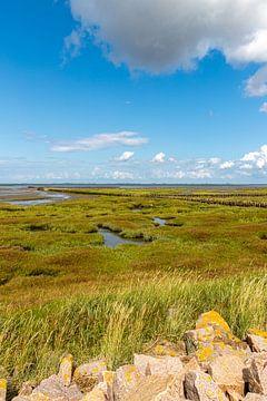 Zoutwaterweide in het Nationaal Park Waddenzeegebied van Alexander Wolff