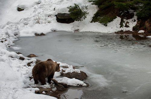 Bruine beer aan waterkant van