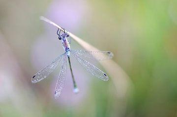 Libelle van
