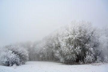 gefrorene kahle Bäume mit Rauhreif auf einer Waldlichtung, graue Landschaft an einem kalten, neblige von Maren Winter