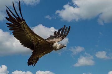 Vliegende gier van