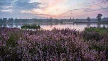 Heide ven zonsopkomst van Chantal van Dooren