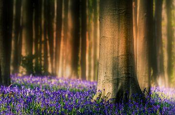 Blick in blauen Wald