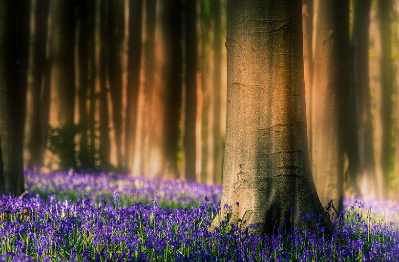 View in blue forest van Wim van D
