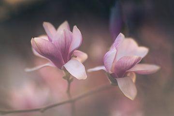 Een par de deux van magnolia's van Regina Steudte | photoGina