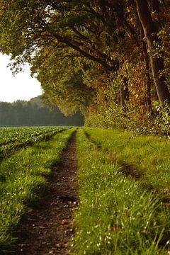 Pfad entlang des Waldes von Anke Winters