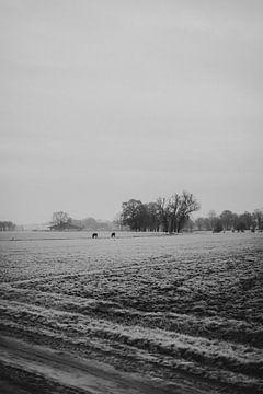 Die Felder von Daarle in der Winterkälte von Holly Klein Oonk