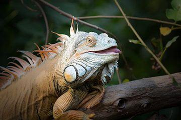 Chameleon sur