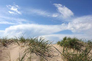 Dünen im Gegenlicht van Ostsee Bilder