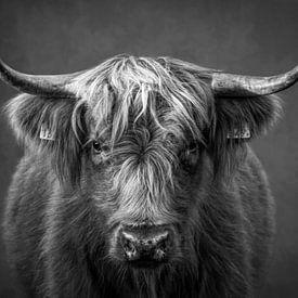 Schottischer Highlander: Porträt in Schwarz und Weiß von Marjolein van Middelkoop