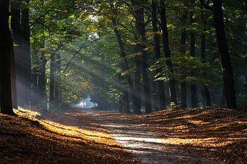 Zonnestralen door bomen in de herfst von Maurice Verschuur