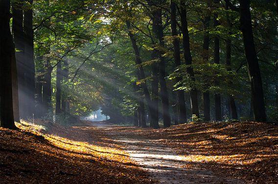 Zonnestralen door bomen in de herfst van Maurice Verschuur