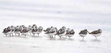Strandlopers von Nathalie Jongedijk
