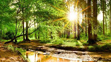 Sonnenaufgang im Wald sur Günter Albers