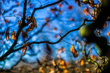 Herfstkleuren.07 (2x3) van Timo Bergenhenegouwen
