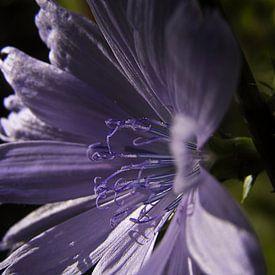 Light on purple sur Ruxandra Proksch
