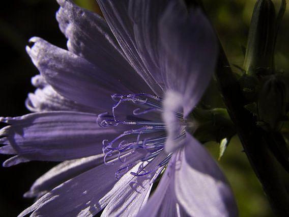 Light on purple
