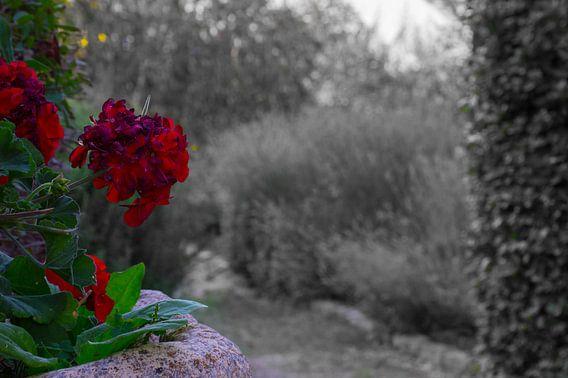 mooie contrastrijke bloem