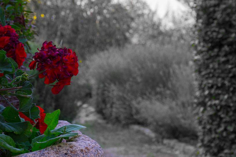 mooie contrastrijke bloem van Patrick Verhoef