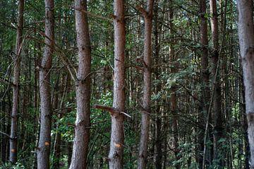 Bomen in een rijtje van Anita van Hengel