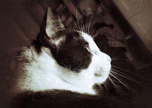 Guten Morgen, Kätzchen von mimulux patricia no