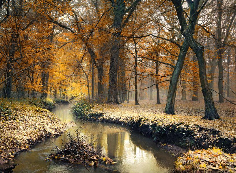 Beekje door de herfst van Rob Visser