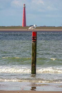 Möwe am Strandpfosten De Hors Texel von Ronald Timmer