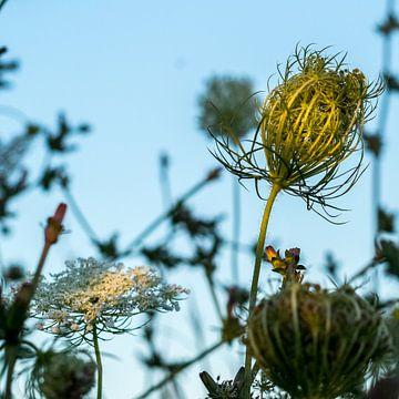 Berm met wilde bloemen van Jan Croonen