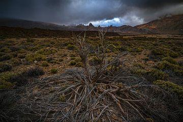 El arbusto moribundo sur Joris Pannemans - Loris Photography