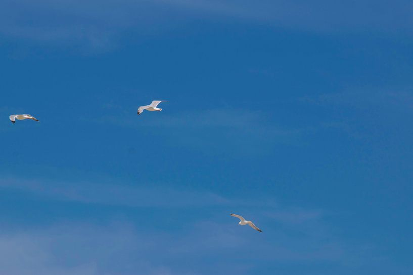 Seagulls sur Remco Mange