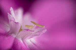 Blume Herz von Elbert-Jan Achterberg