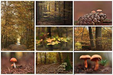 Herfst collage van John Leeninga