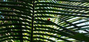 Anse Cocos, La Dique - Seychelles